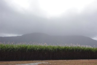 Tully - Rainview