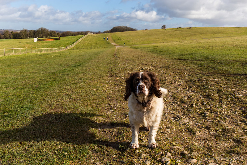 Max at Badbury Rings