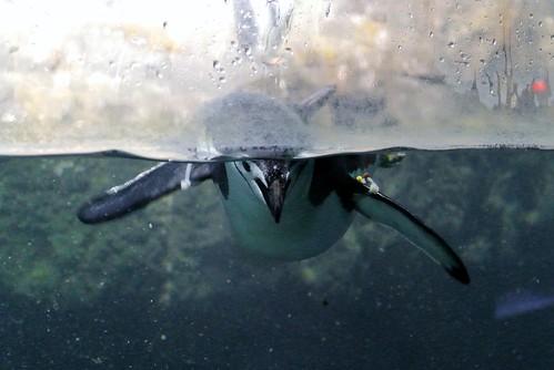 Half submerged