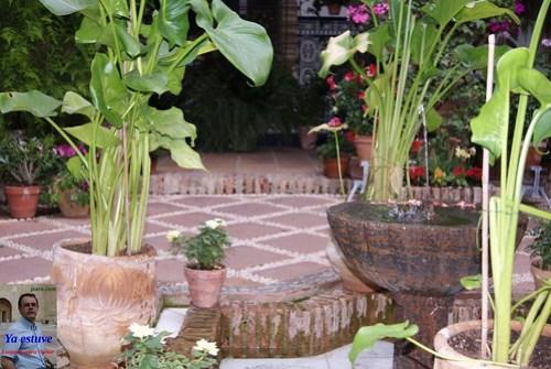 Plantas y agua Patios Córdoba