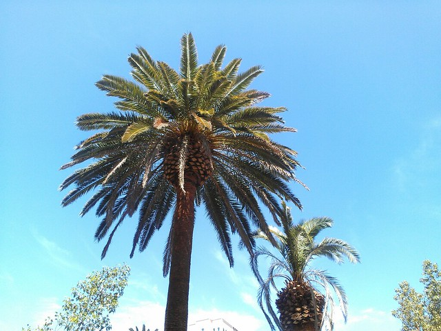 I really like palm trees.
