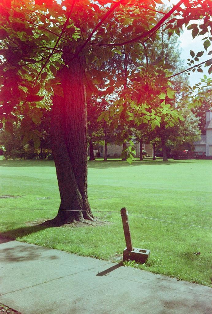 Fairway tree