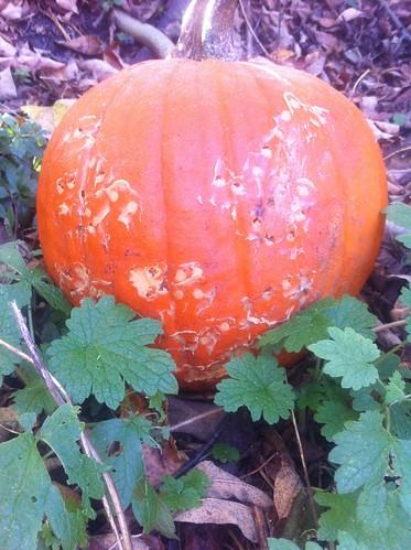 Pumpkin 6 Day 9