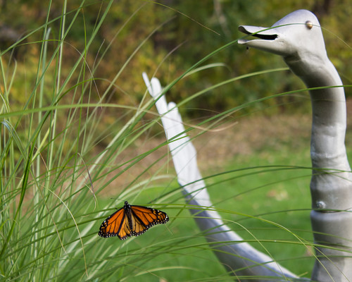 Butterfly and Goose by Christopher OKeefe