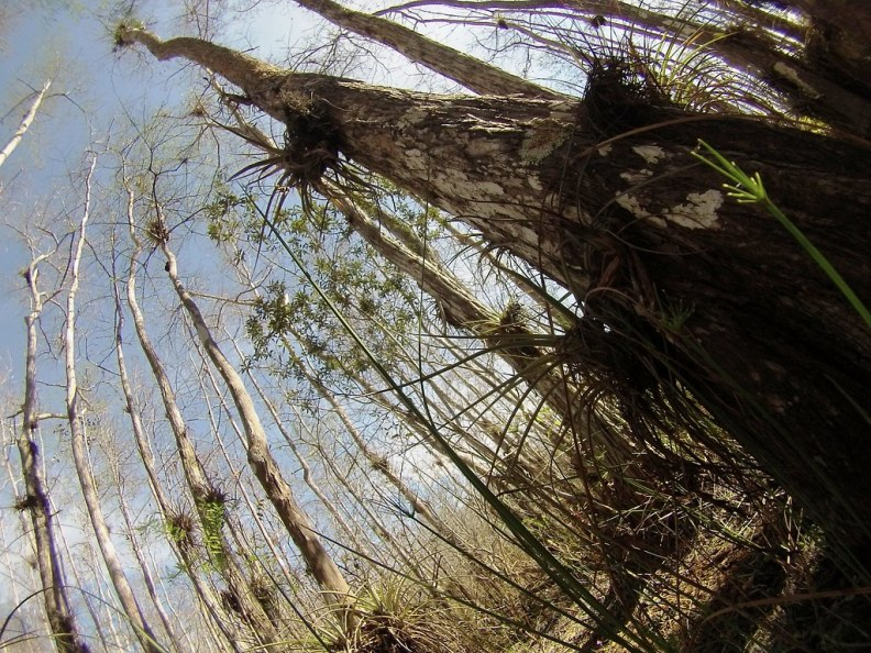 Bald Cypress Trees Are My Favorite Trees