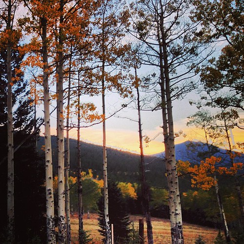 #colorado #aspens by @MySoDotCom