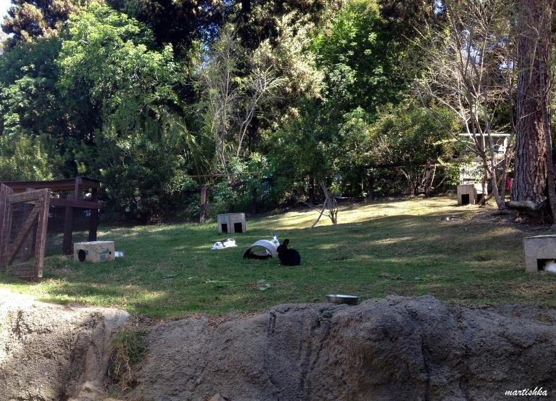 Oakland Zoo (25)