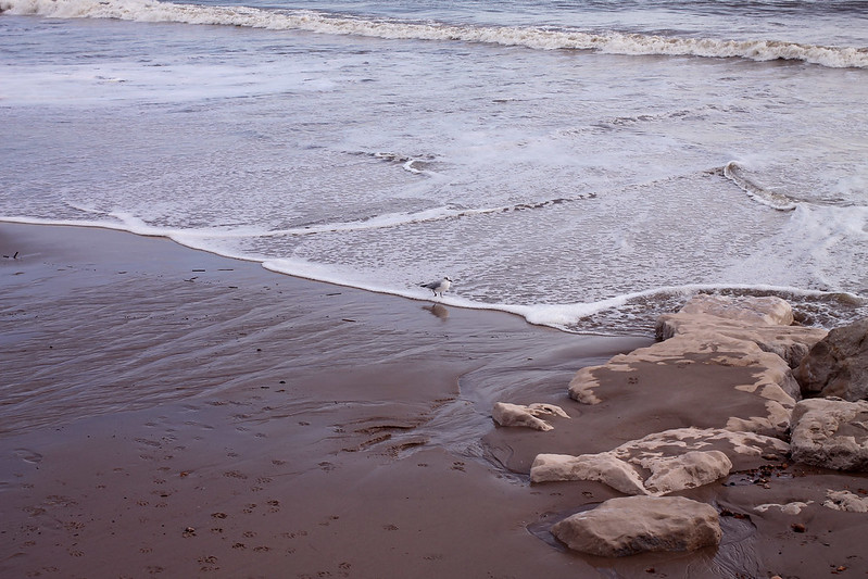 Tide and a seagull