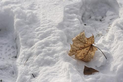 Golden: Dawes Arboretum in Winter