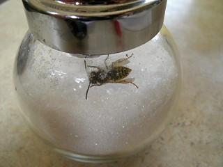 Wespe im Zuckerstreuer