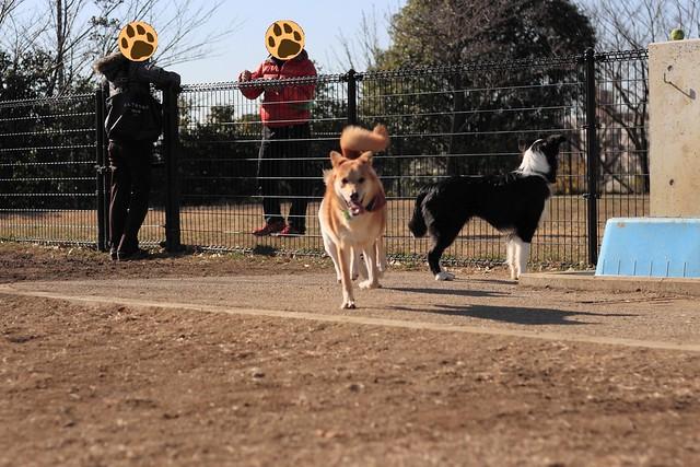 01_14_dog_run_0010