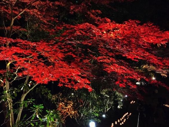 紅葉綺麗〜!