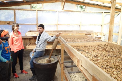 Coffee Tour at Santamaria's Finca Agroturistica