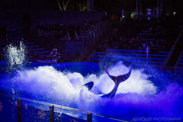 Shamu Killer Whale Christmas Show Sea World