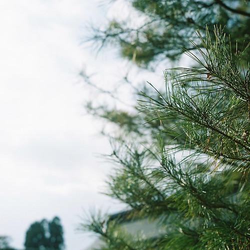 Rolleiflex_02_04