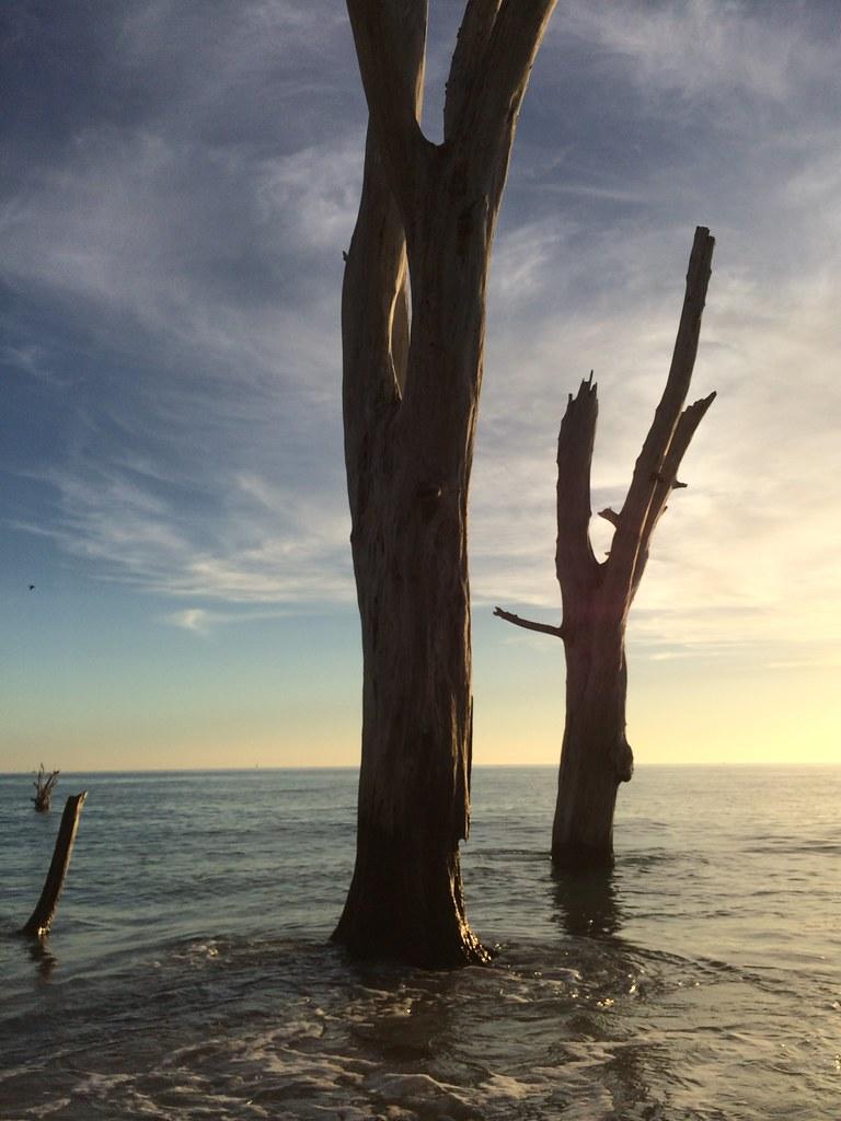 Love the Mystique of the Dead Trees at Stump Pass Beach State Park, Manasota Key, Englewood, Fla., Dec. 28, 2014