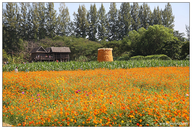 Jim Thompson,Jim Thompson Farm,曼谷,泰絲,金湯森農場 @VIVIYU小世界