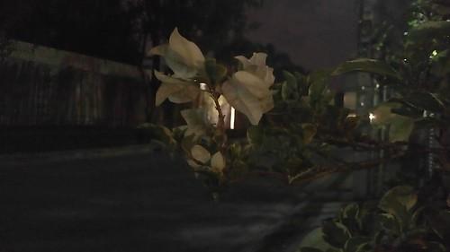 ภาพถ่ายกลางคืนโดย Oppo R5 (Colorful Night Mode)