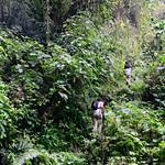 01 Viajfilos en Panama. Sendero Quetzal 48
