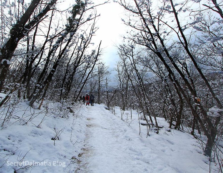 Following the icy trail