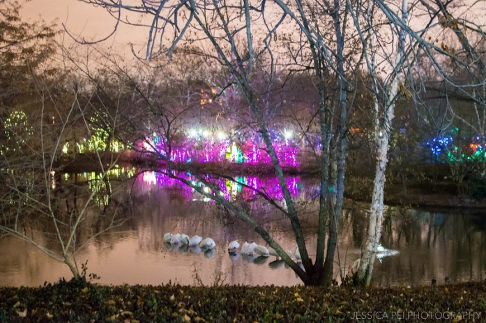 St. Louis Zoo Wild Lights Reflection