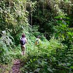 01 Viajfilos en Panama. Sendero Quetzal 35