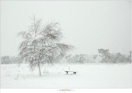 Een mooie witte wereld