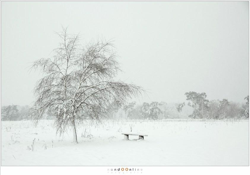 Een mooie witte wereld in een sneeuwbui