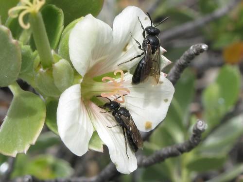 photo courtesy of Friends of Haleakala National Park