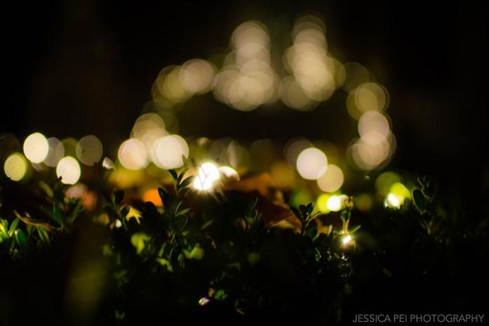 Christmas Lights Bokeh Garden Glow St. Louis