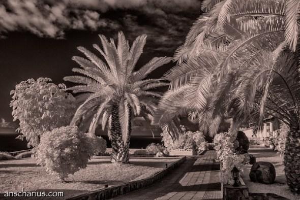 Finca San Juan #2 - Nikon 1 V1 Infrared 700nm & 10-100mm CX Lens