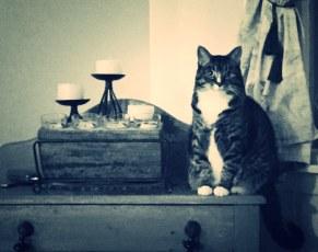 Brenda's Cat
