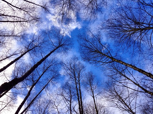 Blue skies above the forest