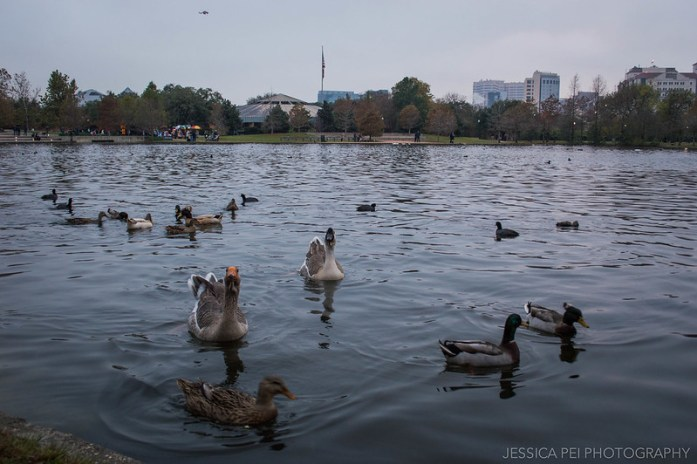 Ducks Hermann Park Houston