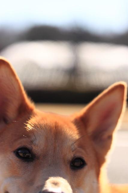 01_14_dog_run_0023