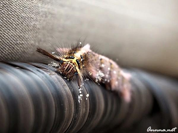 Caterpillar E-PL7