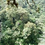 03 Viajfilos en Panama. Canopy en Boquete 14