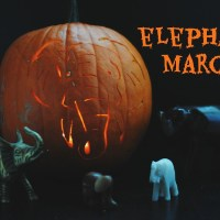 elephant march pumpkin