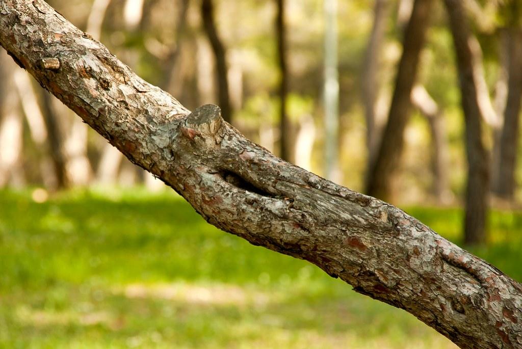 Foto gratis de una rama de pino en un bosque