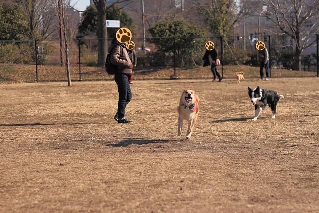 01_14_dog_run_0016