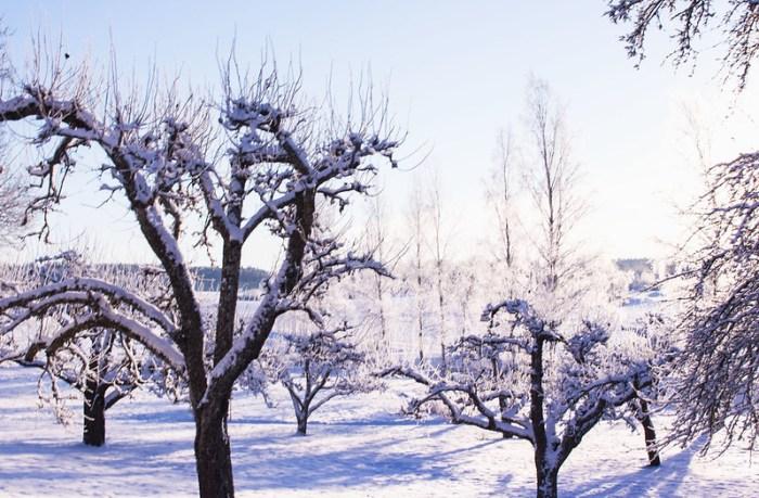vinterslanten19