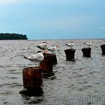 08-Viajefilos-en-Panama.-Isla-de-Bocas-12