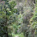 01 Viajfilos en Panama. Sendero Quetzal 13