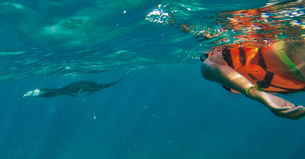 Heather swimming with the manta rays.