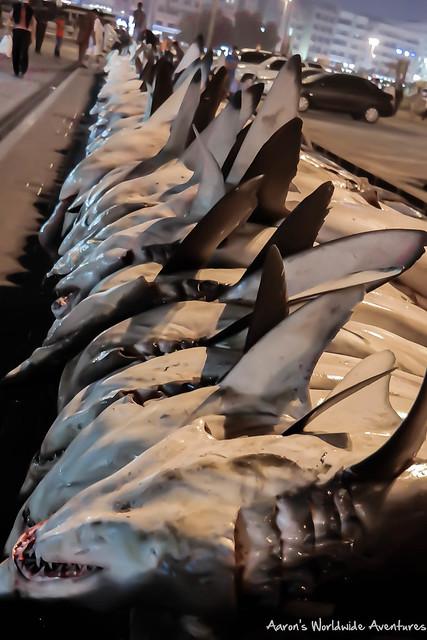 Sharks for Sale