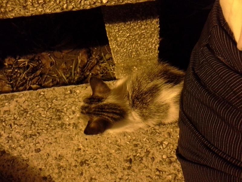 Sycip Kitten 20140506_212748