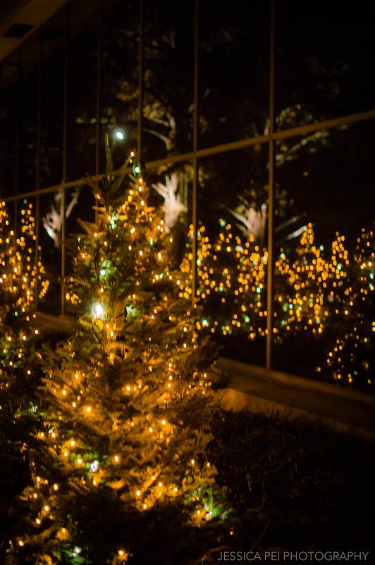 Christmas Tree Reflection in Garden Glow St. Louis