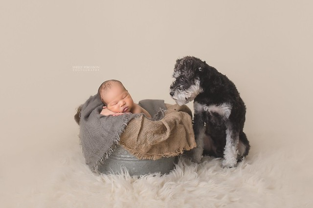 toronto newborn and dog photographer