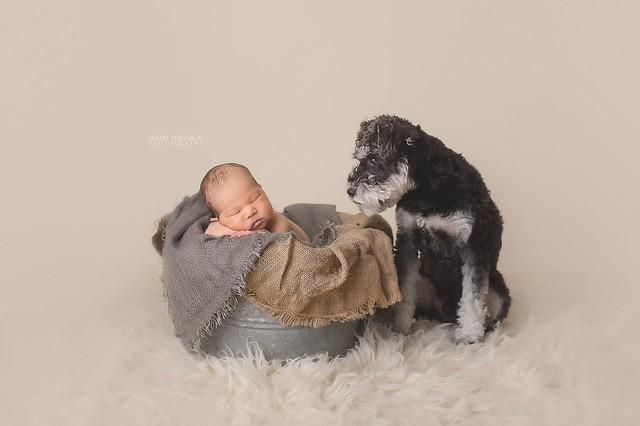 toronto newborn and dog photographer