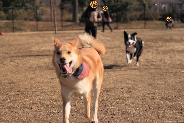 01_14_dog_run_0017